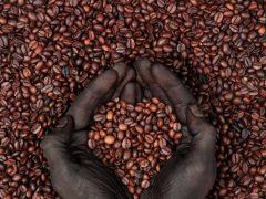 Сортовой кофе. Поставка с США